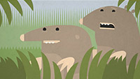 Peeping Moles